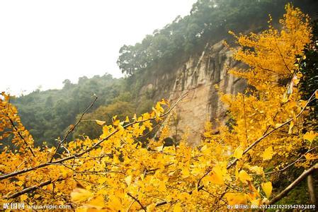 大邑天气预报30天查询,大邑县一个月天气